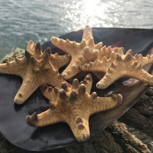 Knobbly Starfish x 4