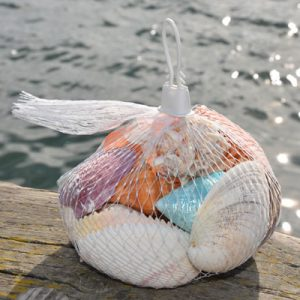Large Bag of Polished Shells