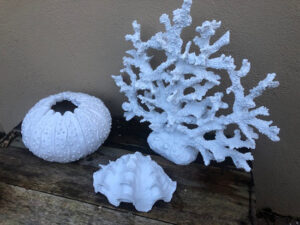 Fire Resin Coral is pictured on the right